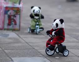 biking pandas