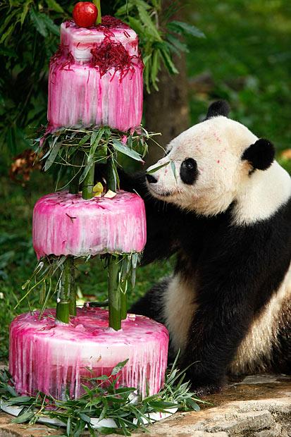 il compleanno del panda 2