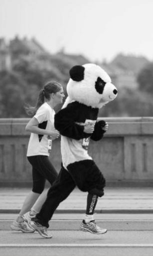 panda-run
